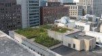 Zielony dach w centrum miasta